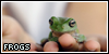 Frogs: