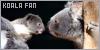 Koalas: