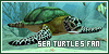 Sea Turtles: