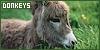 Donkeys: