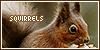 Squirrels:
